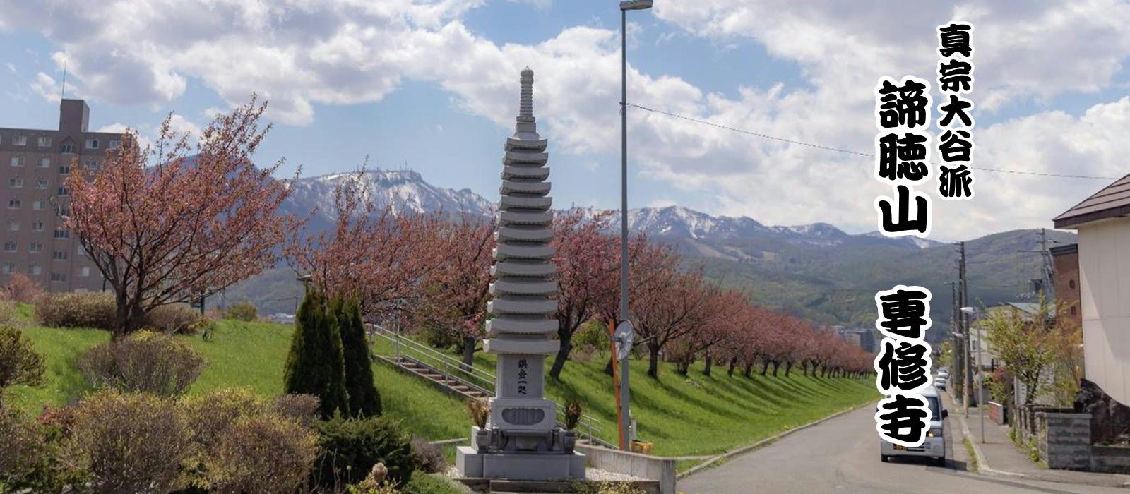お寺からの桜づつみ